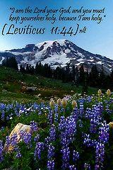 Leviticus 11:44 nlt