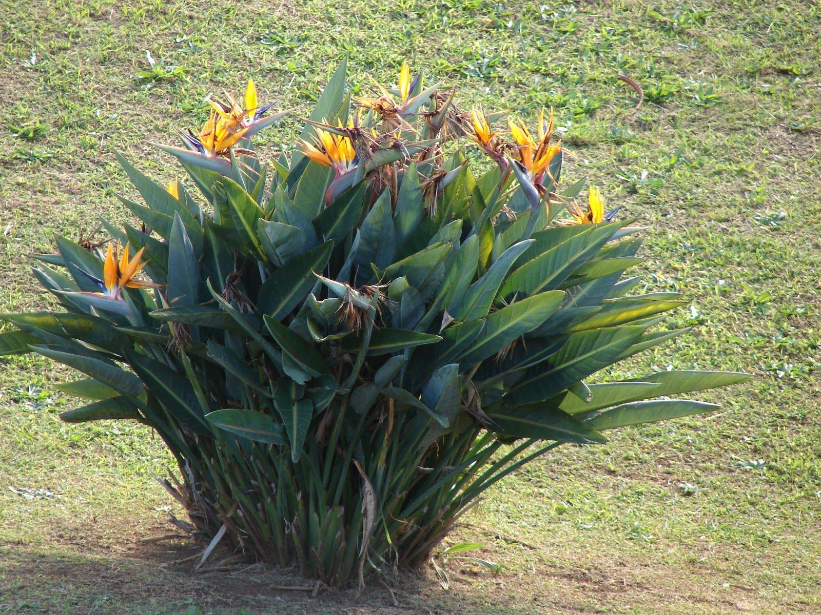 Plantas e Flores: Outubro 2012