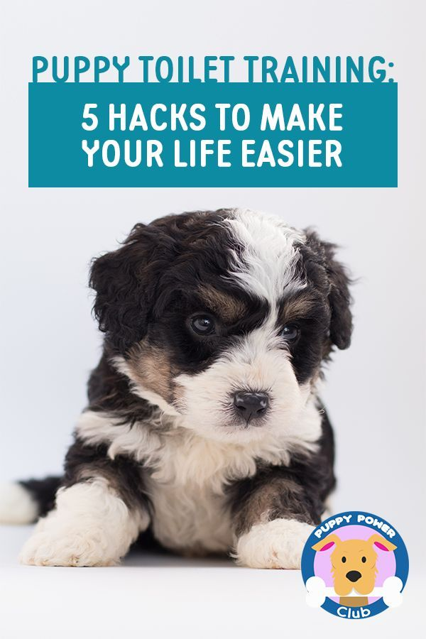 Puppy Toilet Training 5 Hacks To Make Your Life Easier Puppies