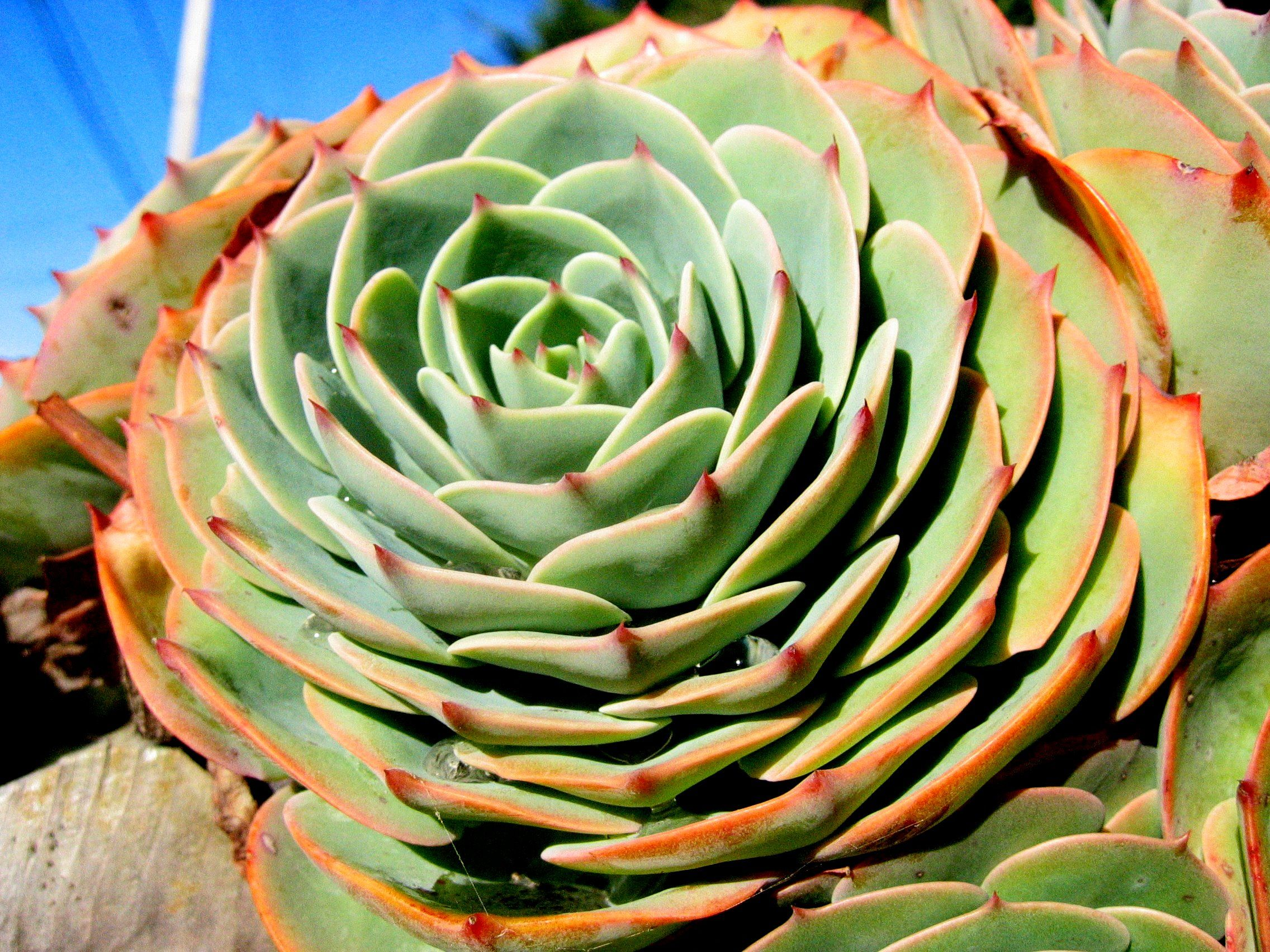 Imagenes de cactus cacti plants and gardens for Fotos de cactus
