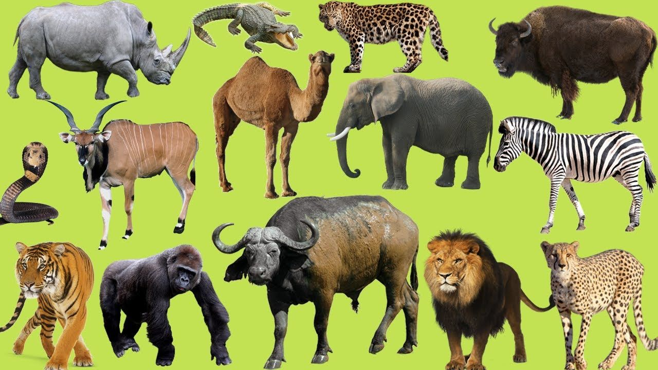 Learning Wild Animals Names and Sounds for kids Learning