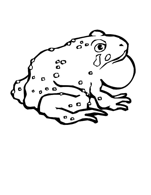 Pin On Bullfrog Coloring Pages