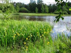 Kuvat   Suomen Luonto