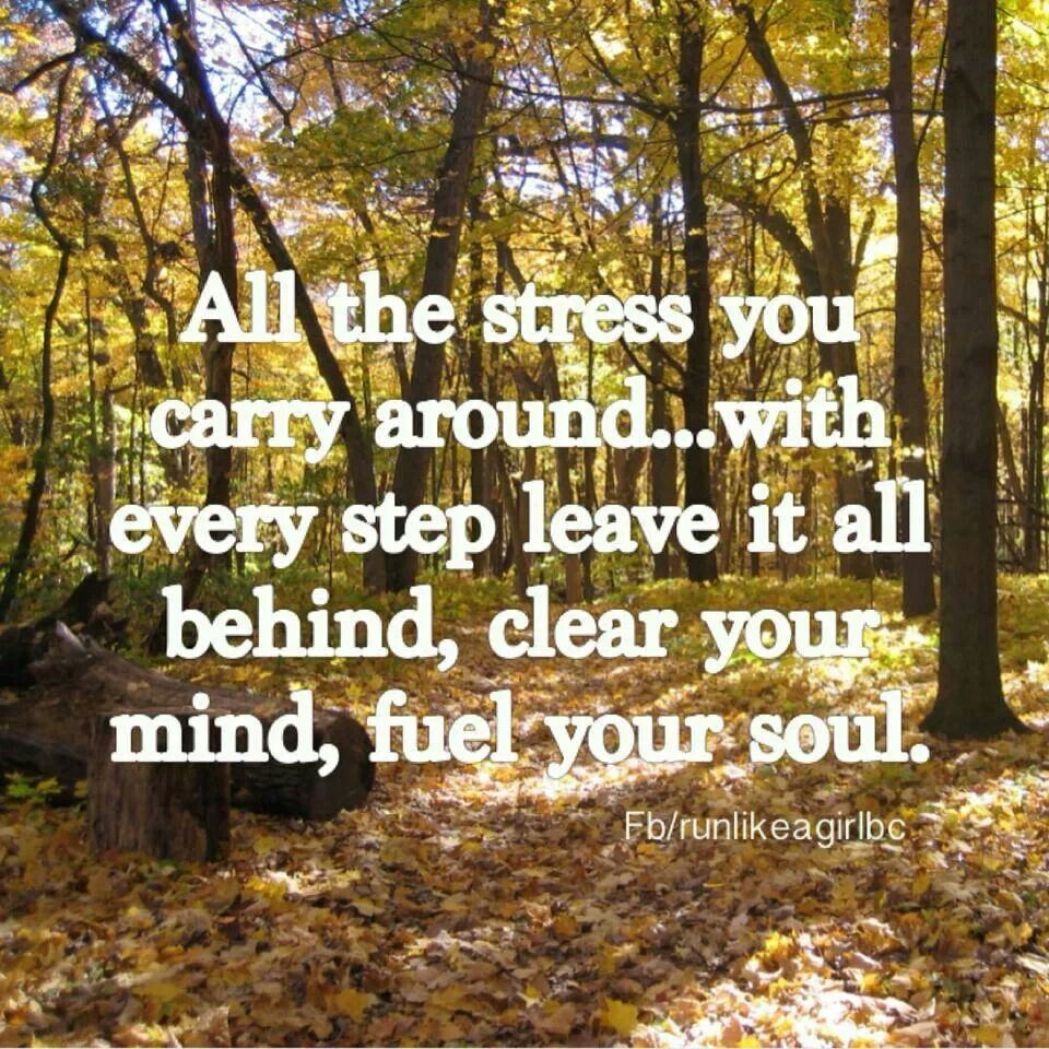 Woods Quotes: A Walk In The Woods ....Natures Cure.