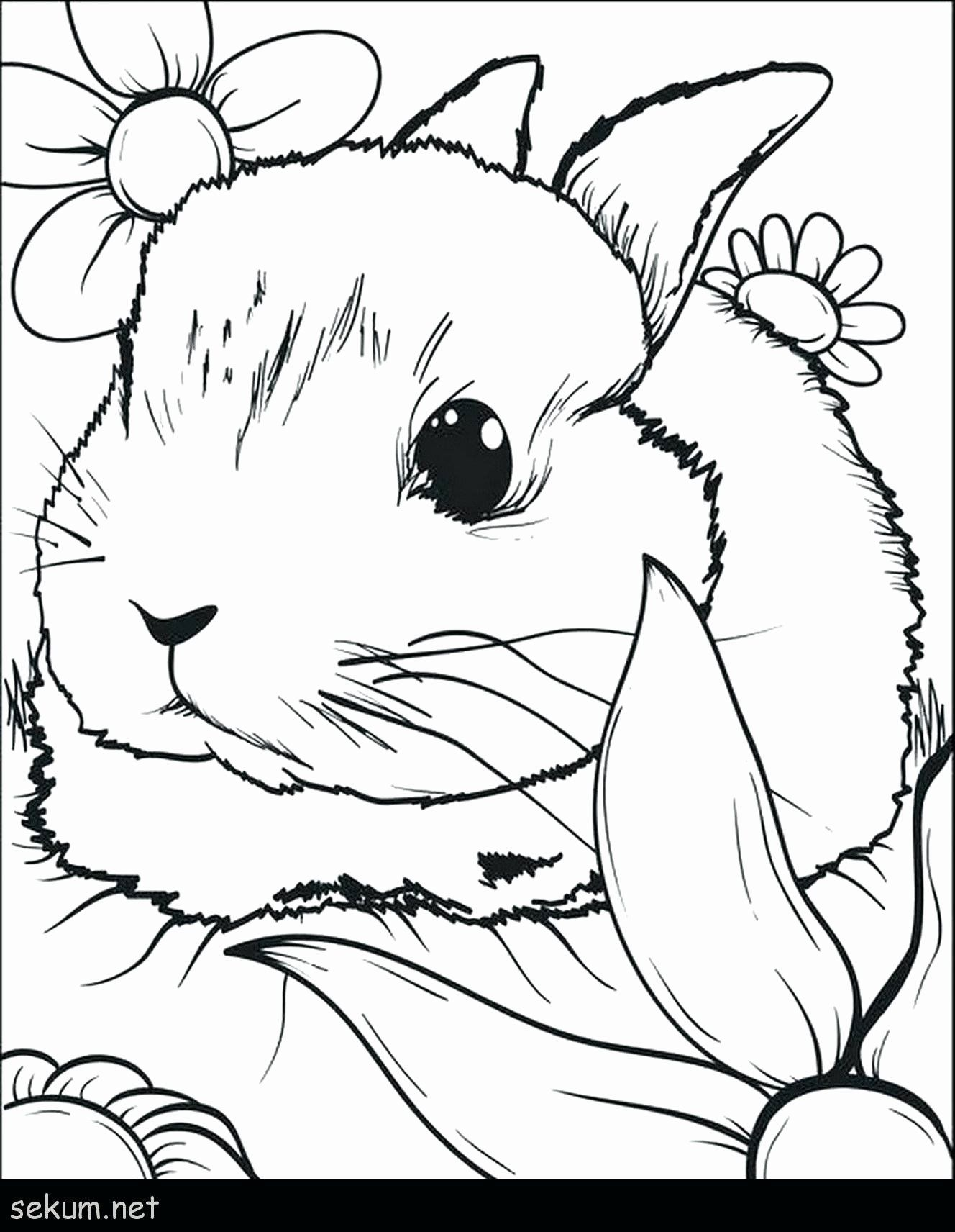 Coloring Pages Of A Rabbit Beautiful Coloring Pages Top Dandy Rabbit Coloring For Toddlers Cute Bunny Coloring Pages Cute Coloring Pages Easter Bunny Colouring