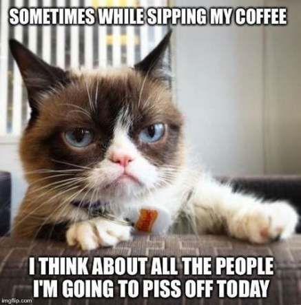20 Funny Cat Memes Work Fluffy Knight Funny Grumpy Cat Memes Funny Cat Memes Grumpy Cat Humor