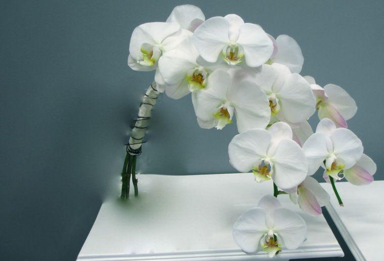 Bouquet Sposa Orchidea Bianca.Bouquet Sposa Orchidea Bianca Dimensioni Ridotte Forma Cascata