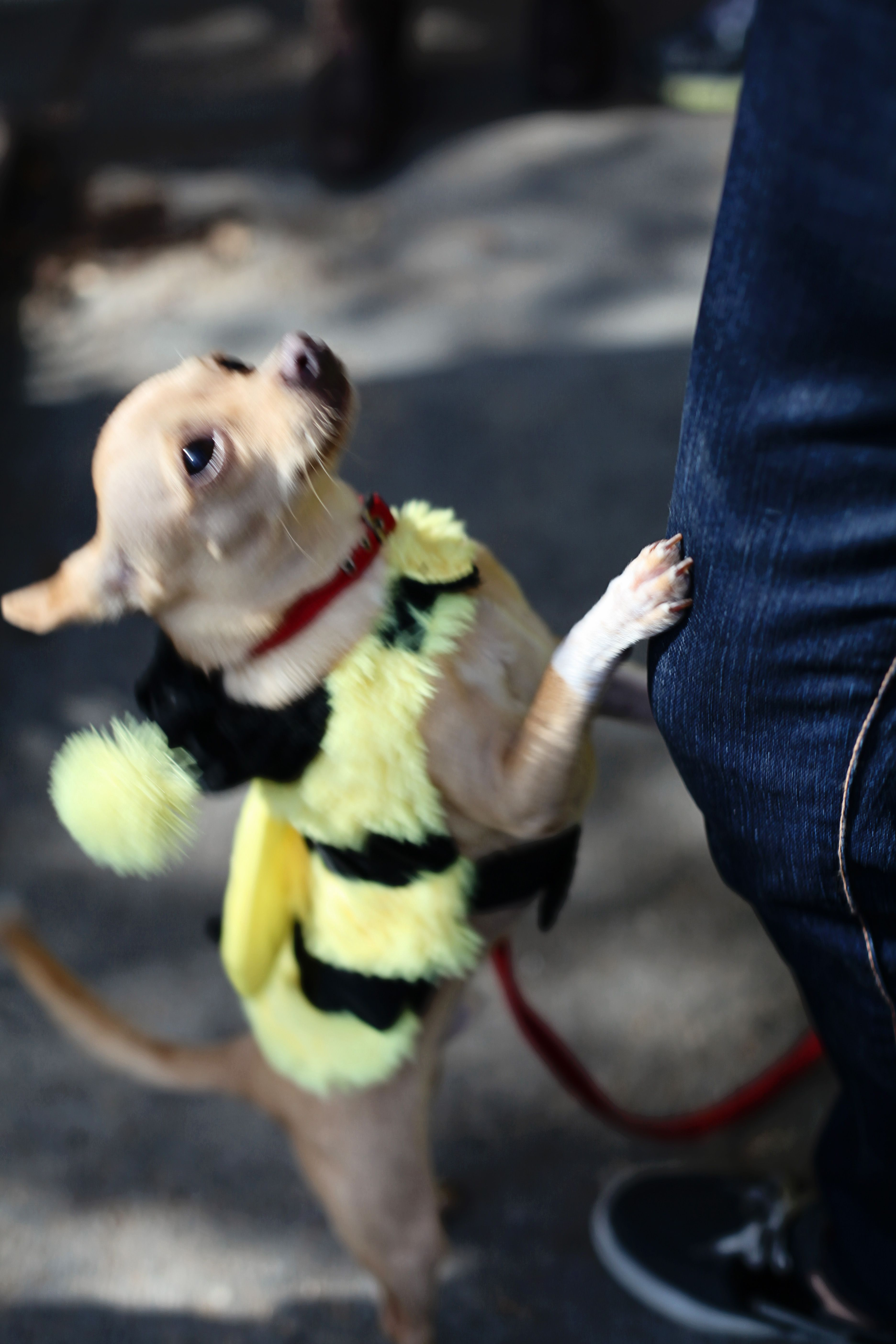 Pet Parade and Costume Contest EACH HALLOWEEN AT PLANTERS CROSSING on