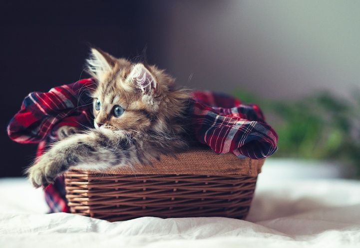 The Cutest Little Kitten in the World. Her name is Daisy. Photographer:Ben Torode.