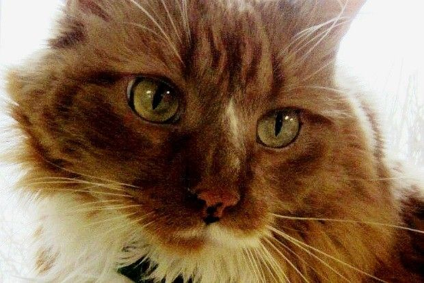 Rescue Cat Saves New Owner From Seizure 24 Hours After