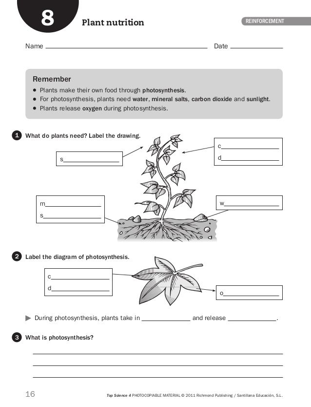 Fichas Inteligencia 4º Science Worksheets Science And Nature Science