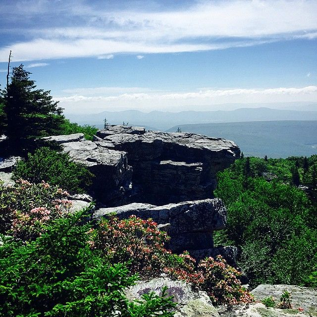 Bear Rocks, Dolly Sods, West Virginia.  #dollysods #bearrocks