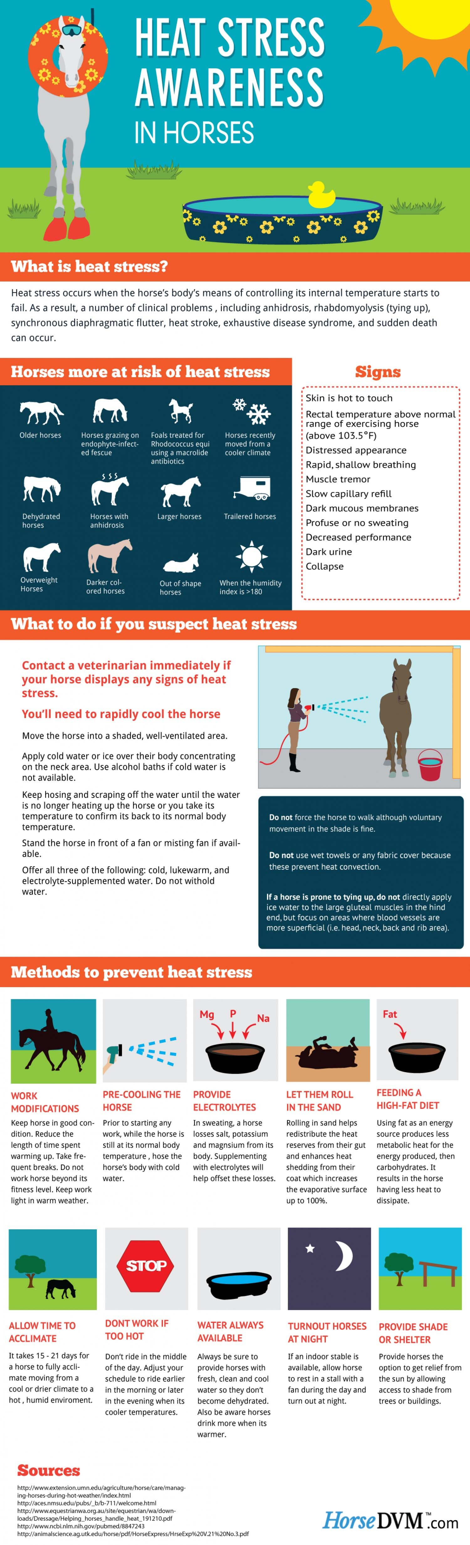 Heat Stroke In Horses Is A Real Danger Do You Know How To Treat