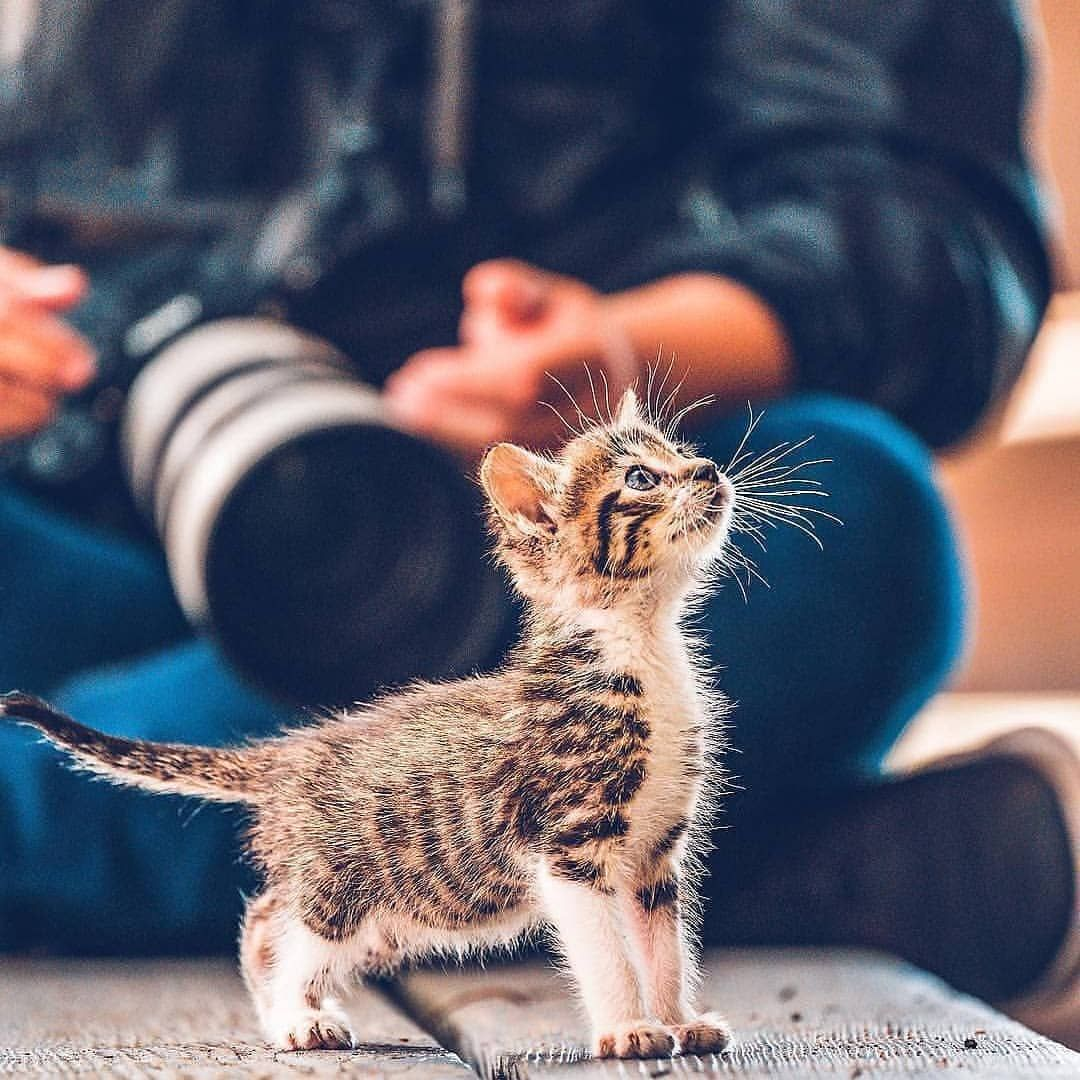 Catsbunker On Bild Gram Posts Videos Stories Bildgram Cats Kittens Cute Kitty Tag Your Friend By E Baby Cats Cute Cats And Kittens Cute Animals