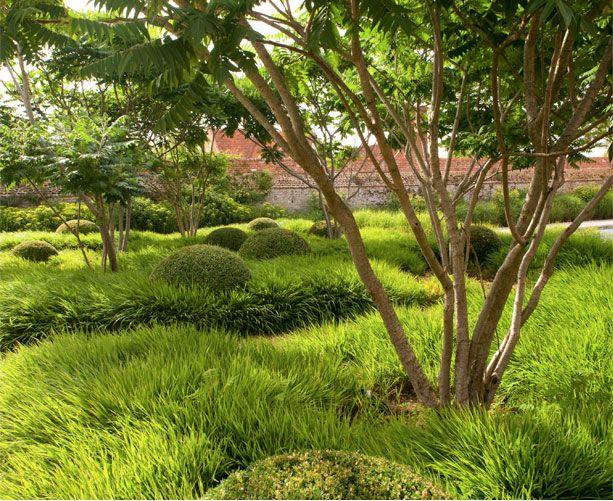 Rhus typhina hakonechloa macra nicolas tom stuart for Japanese mounding grass