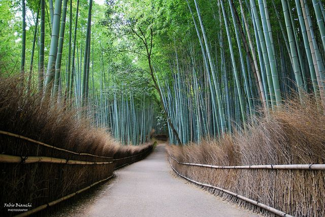 I Bambù di Arashiyama | Flickr - Photo Sharing!