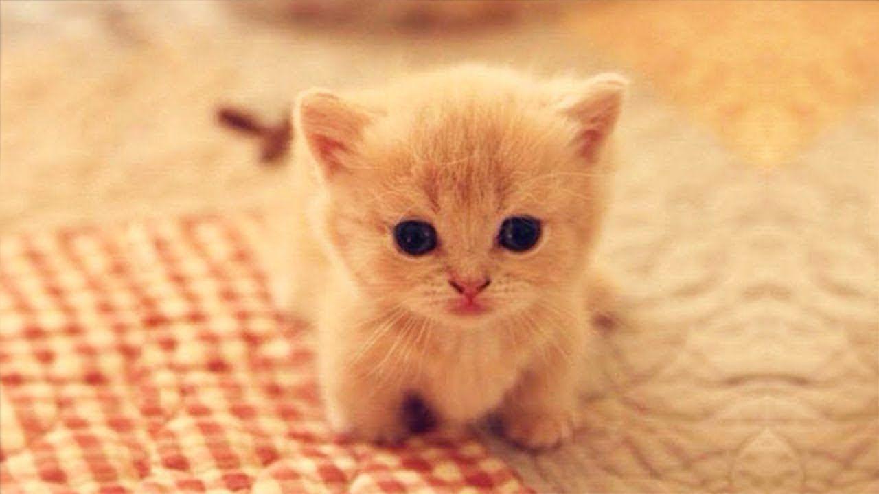 Pin By Hazel Jade On Animals Cute Cat Gif Cute Cats Funny Cute Cats