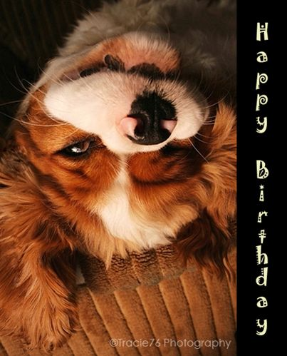 Have a magical birthday free happy birthday ecards greeting free happy birthday ecards greeting cards 123 bookmarktalkfo Gallery
