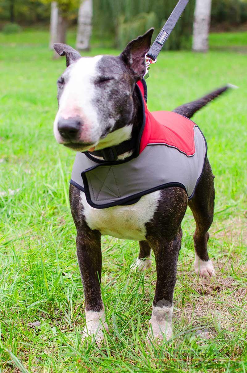 English Bull Terrier Bull terrier, Terrier dog breeds