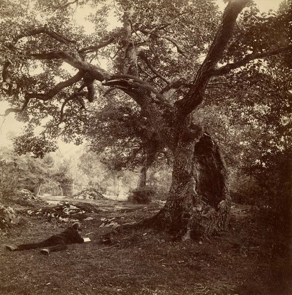 WILLIAM DROOKE HARRISON  etude d'arbre, vers 1880
