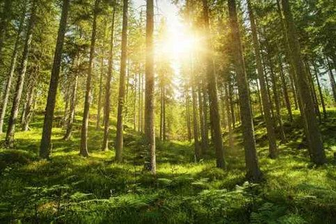 Wall Sticker Mural Leaves Trees Spring Forest Sun Rays