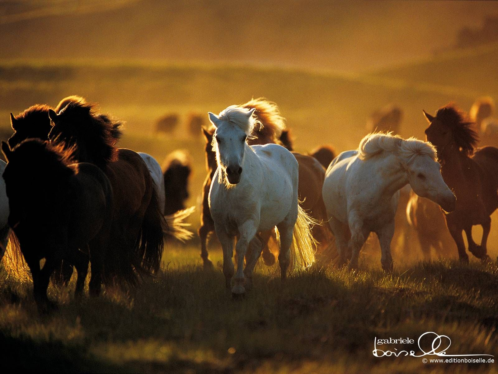 Free Horse Screensavers And Wallpapers Wallpaper Cave Horses