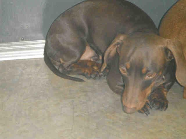 Urgent Needs Out Now Pensacola Florida Coco A244925 Is A 2