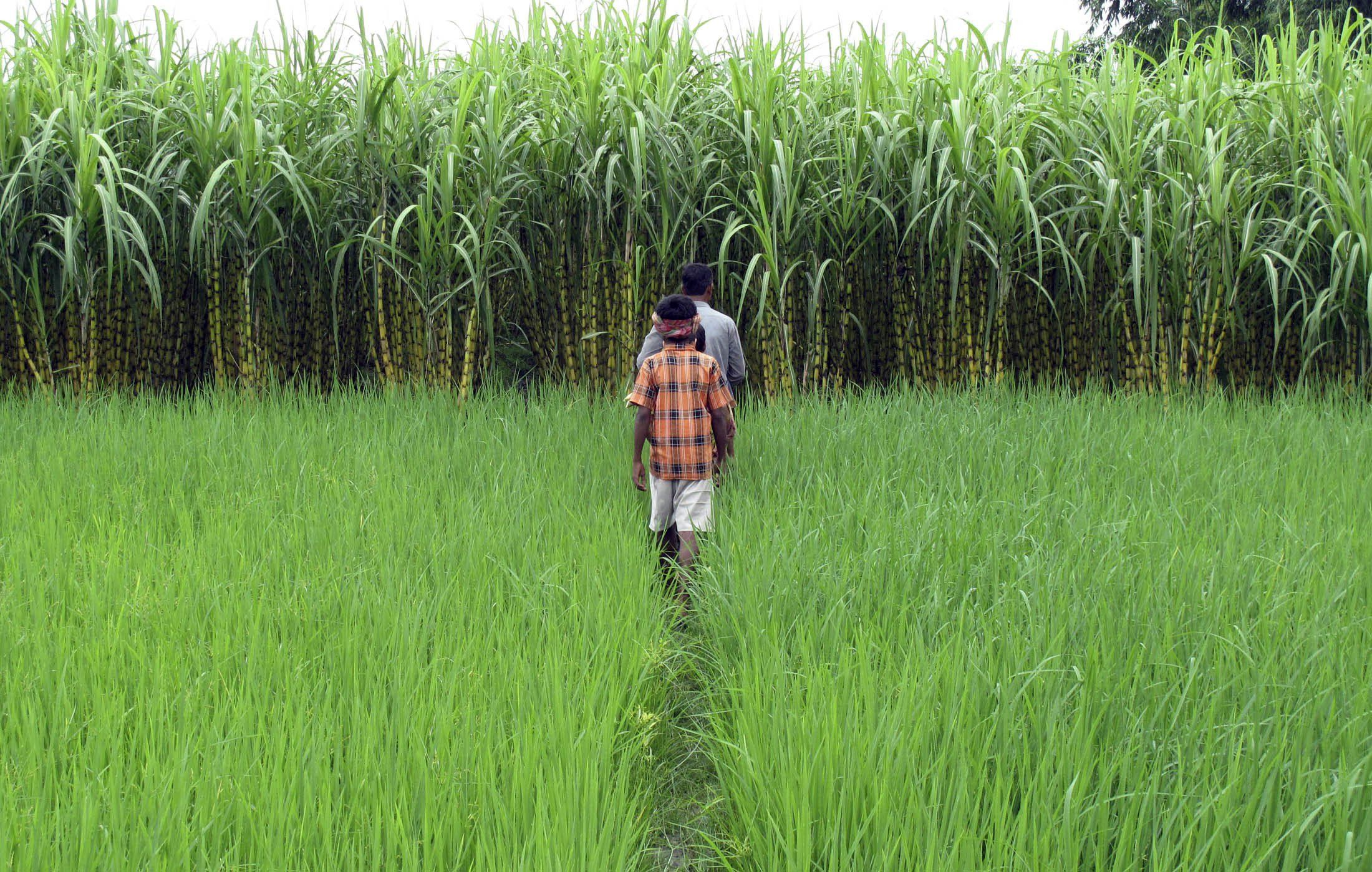 """Agriculture in India continues to remain the only sector"