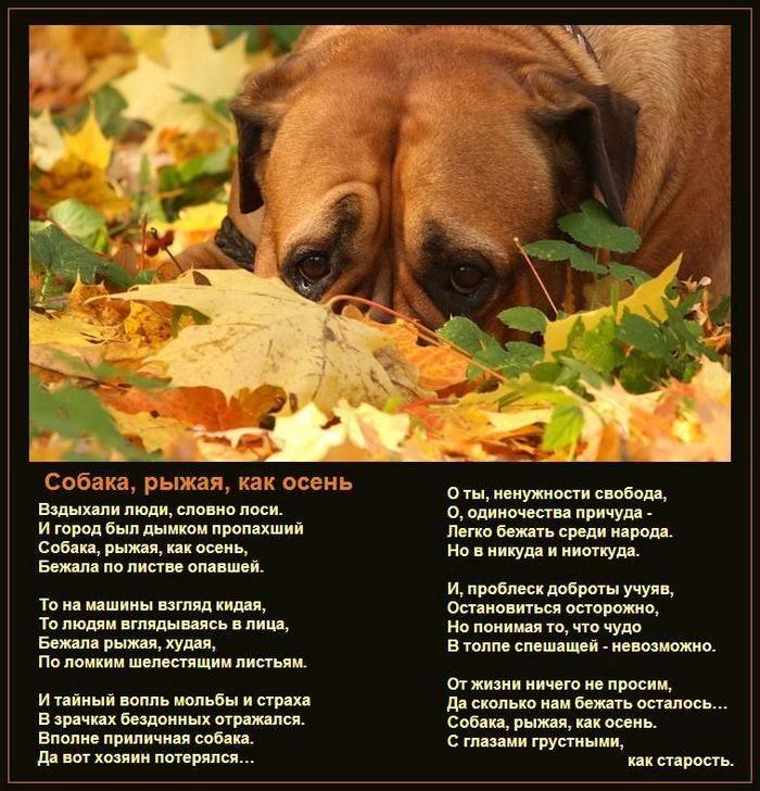 """Притча """"Человек и собака"""" (стихи и картинки о собаке ..."""