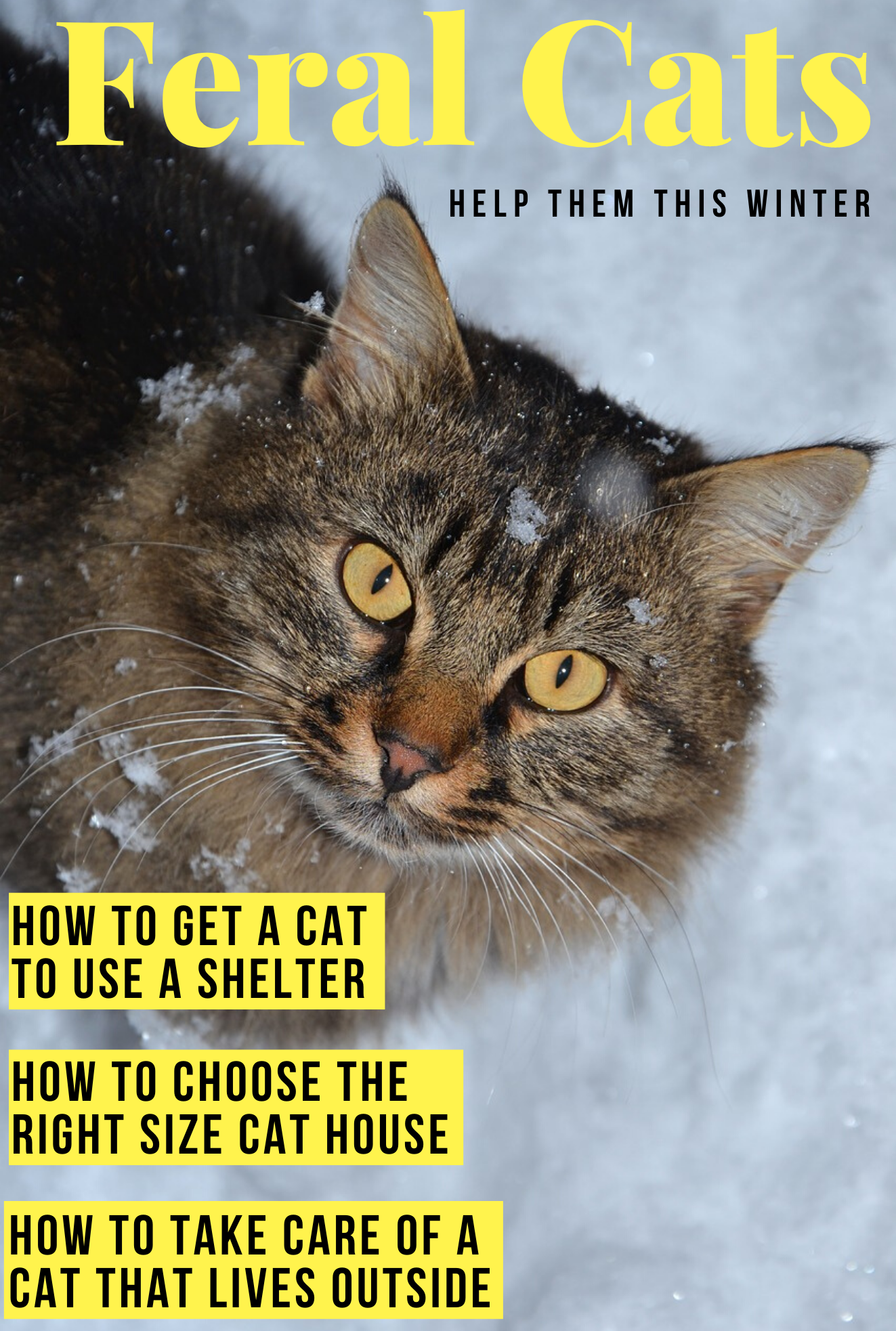 How To Help Feral And Stray Cats Cat Shelters For Winter Feral Cat House Outside Cat Shelter