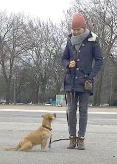 So Zieht Dein Hund Nicht Mehr An Der Leine Hunde Hundebesitzer Leine Hund