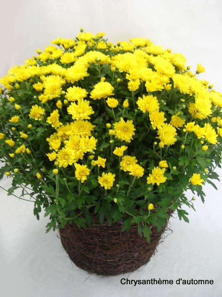 Plantes plantes fleuries couronnes fleuries mariage sur for Plantes de bordures fleuries