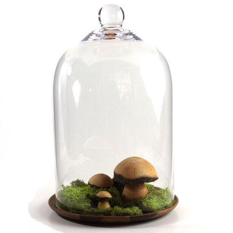 hongos de madera in vidrium