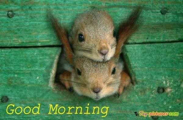 #Squirrels