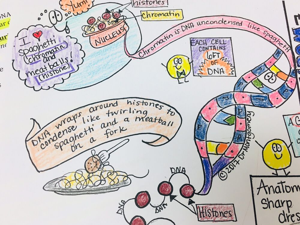 A Sample Unit Plan Using Sketch NotesCellular Molecular