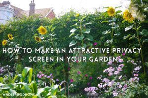 So schaffen Sie eine attraktive Privatsphäre in Ihrem Garten - 2019   - Sichtschutz Pflanzen - #attraktive #eine #Garten #Ihrem #Pflanzen #Privatsphäre #schaffen #Sichtschutz #sie #sichtschutzpflanzen
