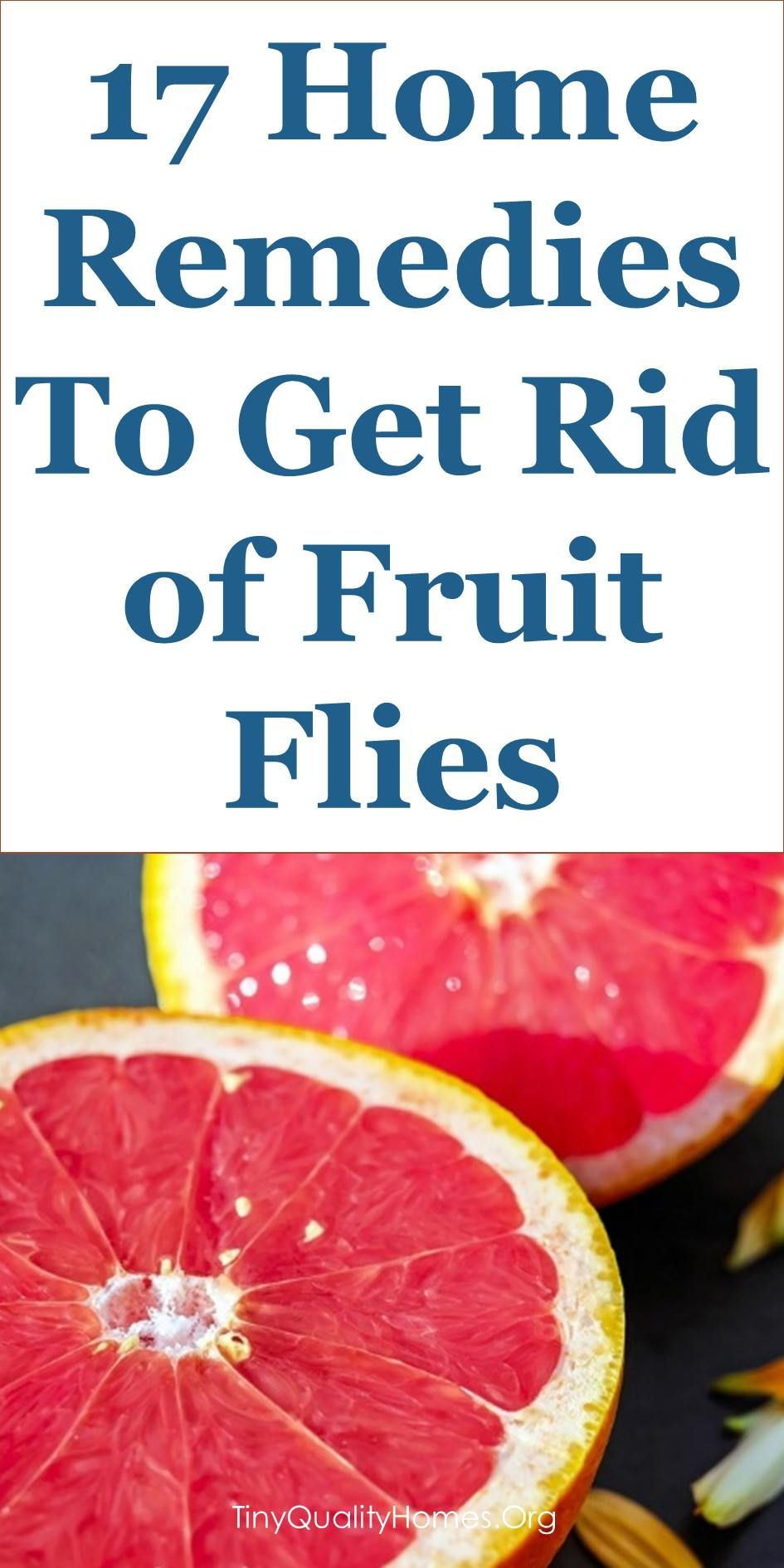 17 Home Remedies Fruit Fly Traps To Get Rid Of Fruit Flies