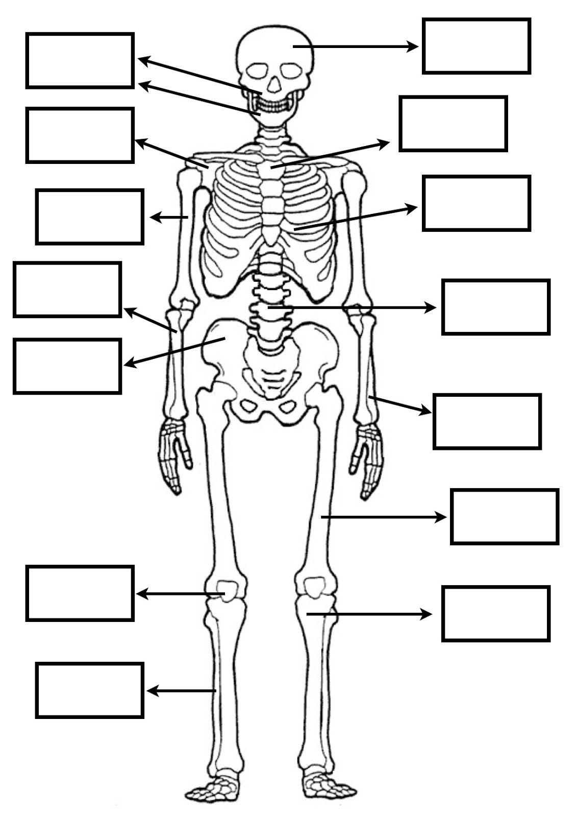 Recursos Y Actividades Para Educación Infantil Con Los Que Todo Maestro Sueña Huesos Del Cuerpo Humano Actividades Del Cuerpo Humano Cuerpo Humano Para Niños