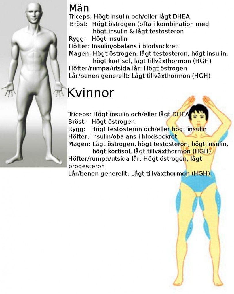 progesteron män