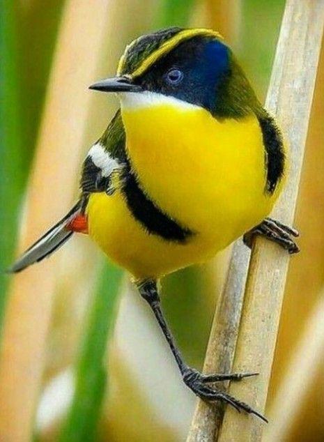 Pin De Jaque Carvalho Em Natureza Fotografia De Animal Passaros