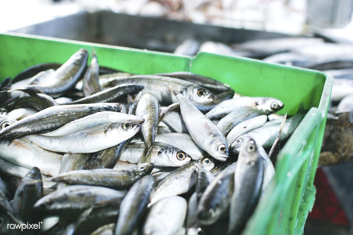 Fresh Fish At A Fish Market Free Image By Rawpixel Com Jakub Kapusnak