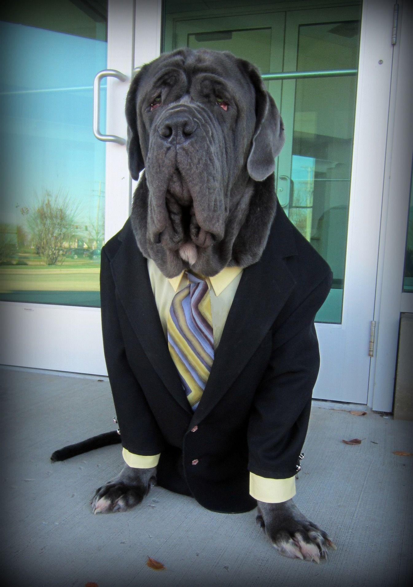 Sharp dressed dog!