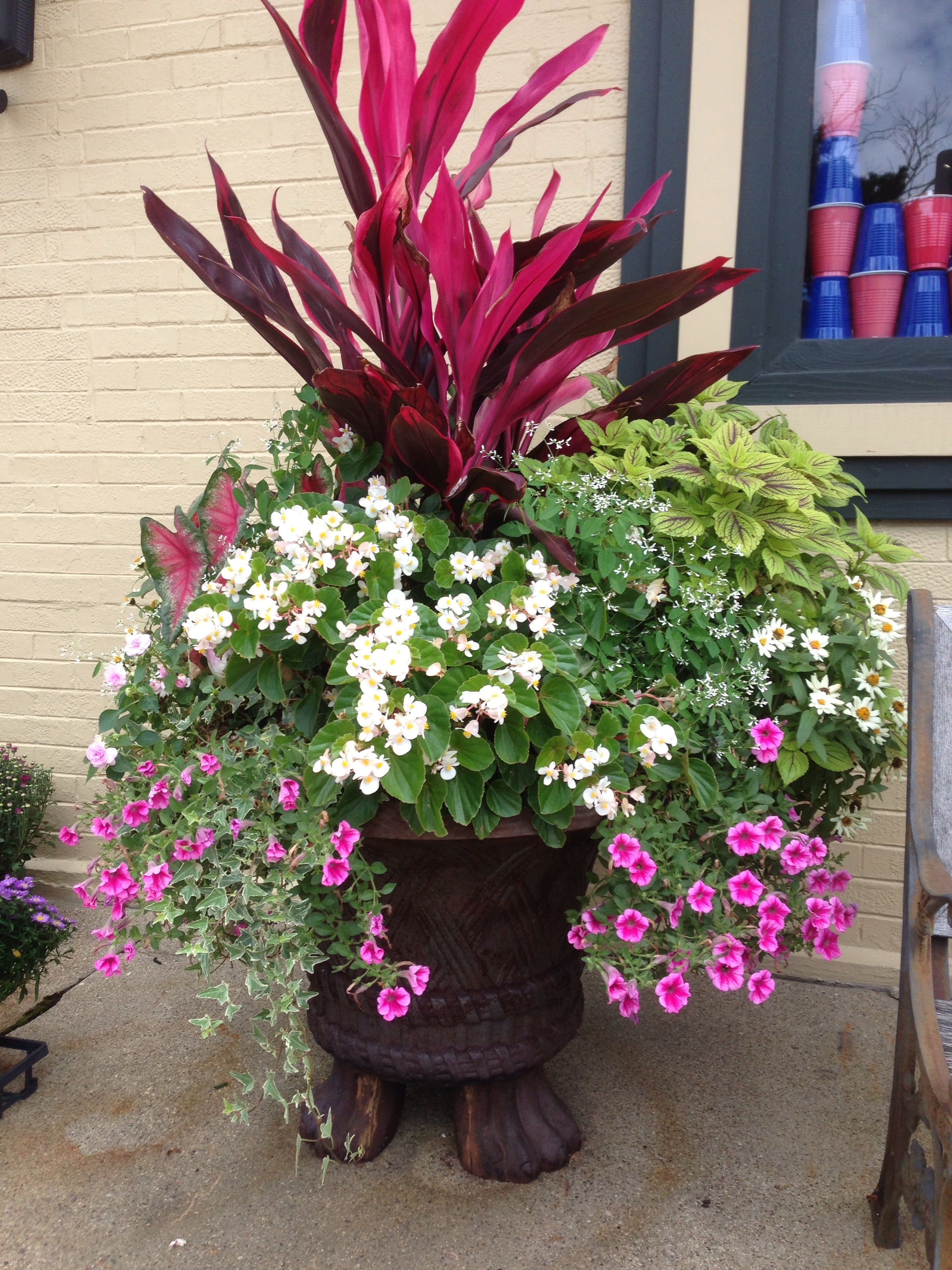 Love The Cordyline Container Gardening Container Flowers Fall Container Gardens