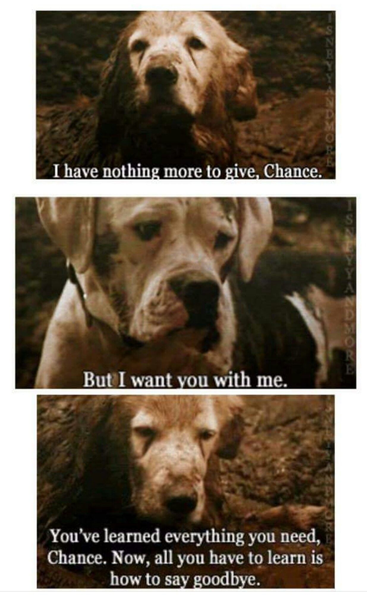Saddest moment in Homeward Bound quotes & sayings