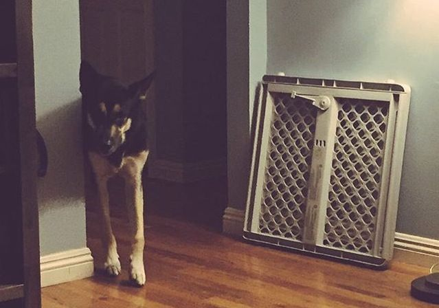 Dobby is afraid of the gate