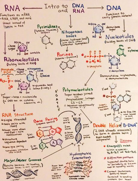 dna rna notes Gene (dna) to act as a template supply of free rna nucleotides enzymes atp   it is important to note that the trna is reused and collects another specific.