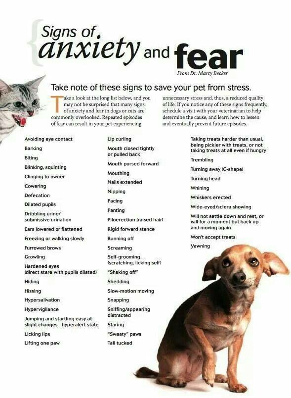 Know how to read your dogs stress signals!