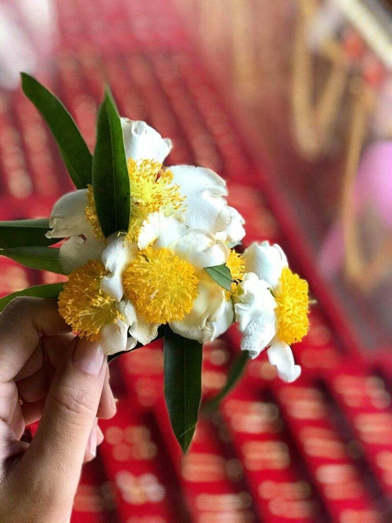 Pin By Flowers In Heart On က က ပန လ မ Plants Garden