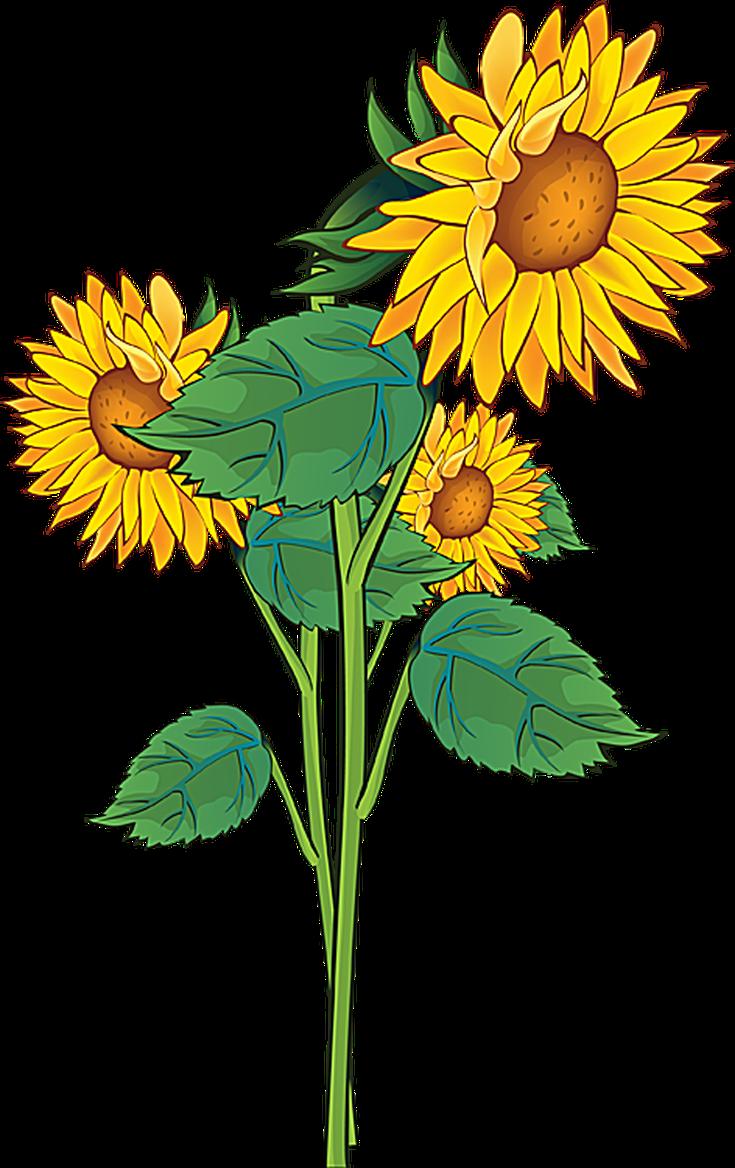 Pontiac's Rebellion An Overview Flower clipart, Flower
