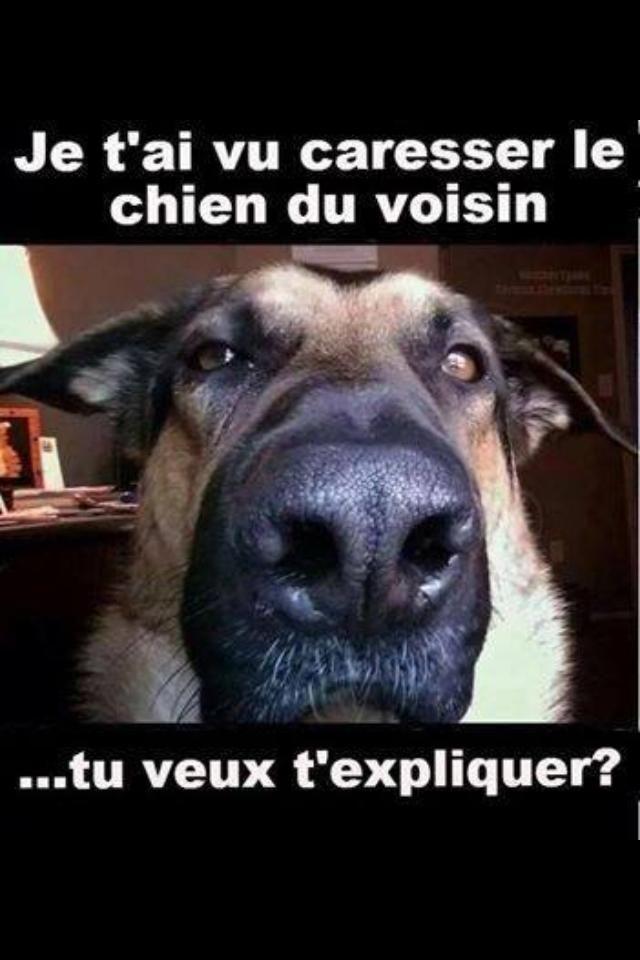 humour chien recherche google citation drole pinterest humour chiens humour et dr le. Black Bedroom Furniture Sets. Home Design Ideas